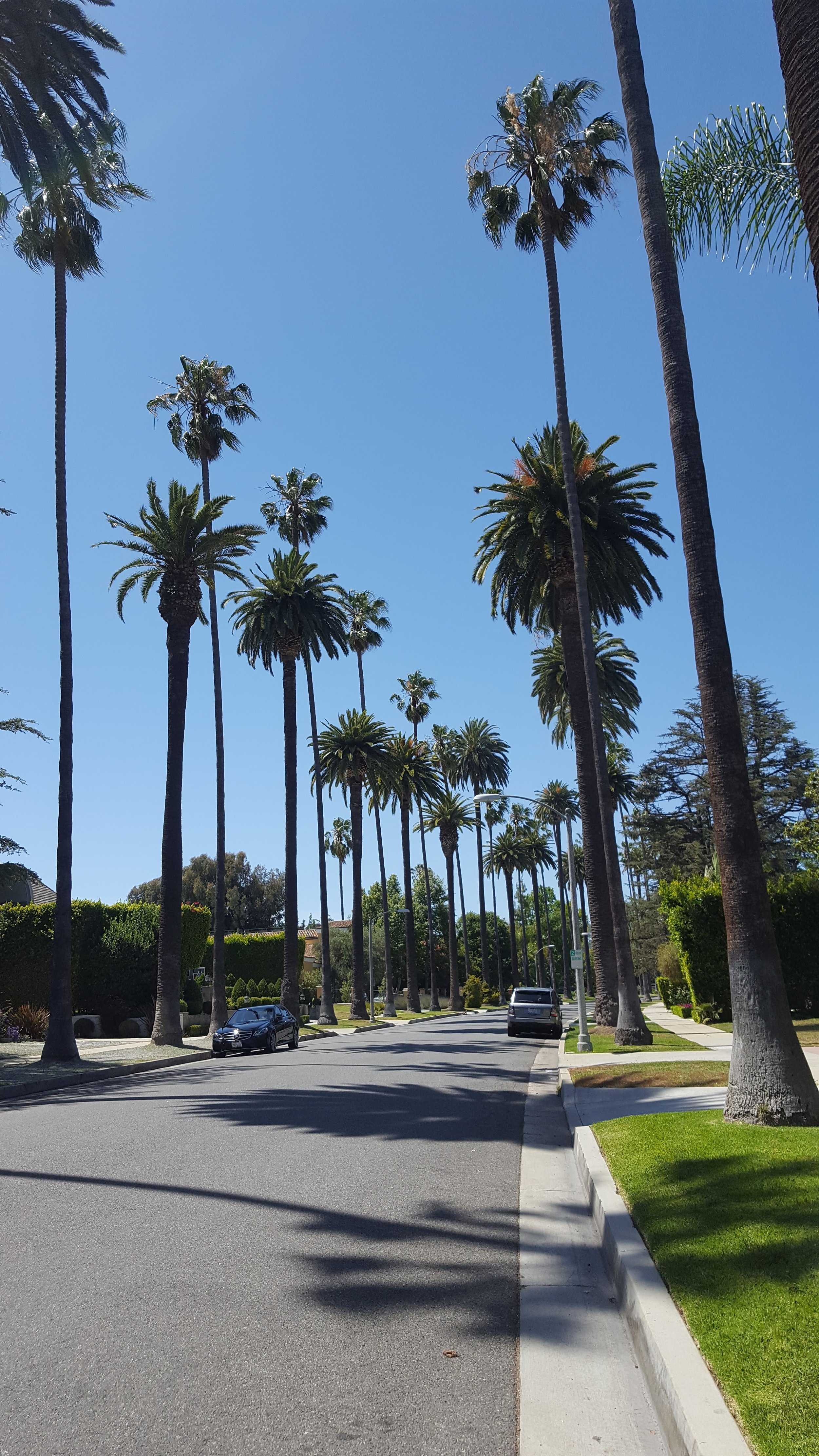 Palm tree-lined streets of Beverly Hills