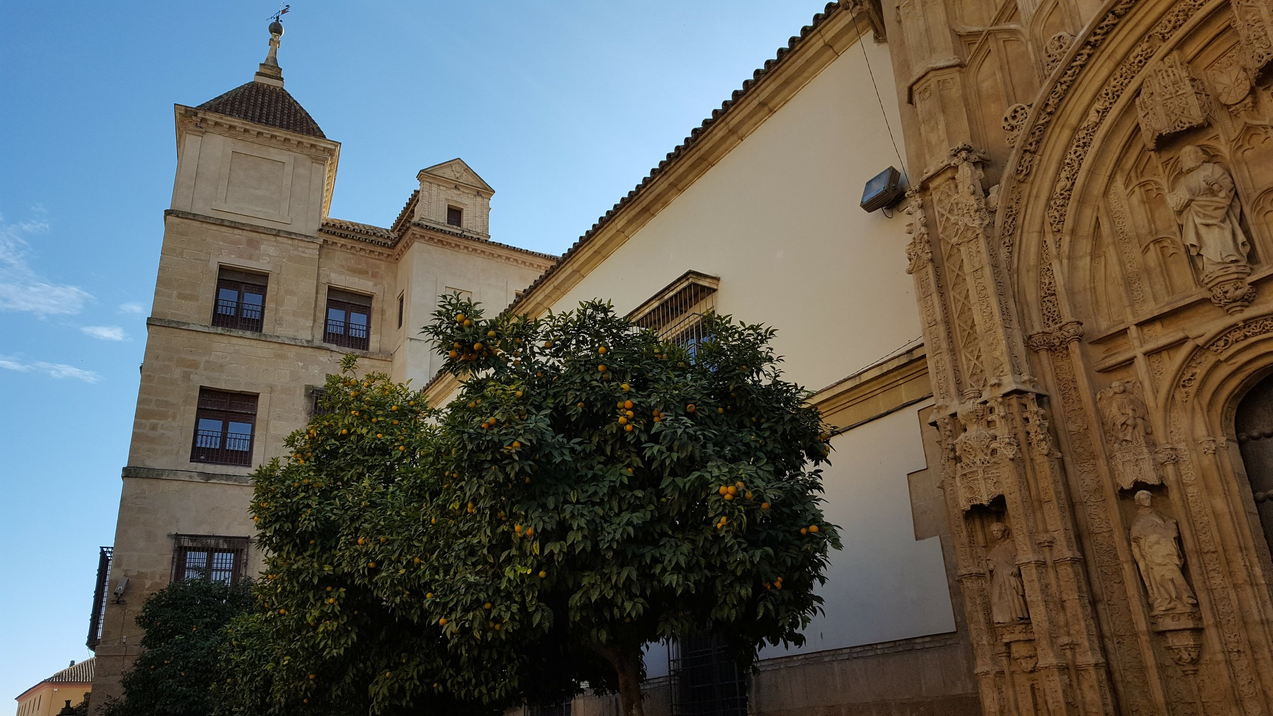 Orange trees outside the Mezquita in Córdoba
