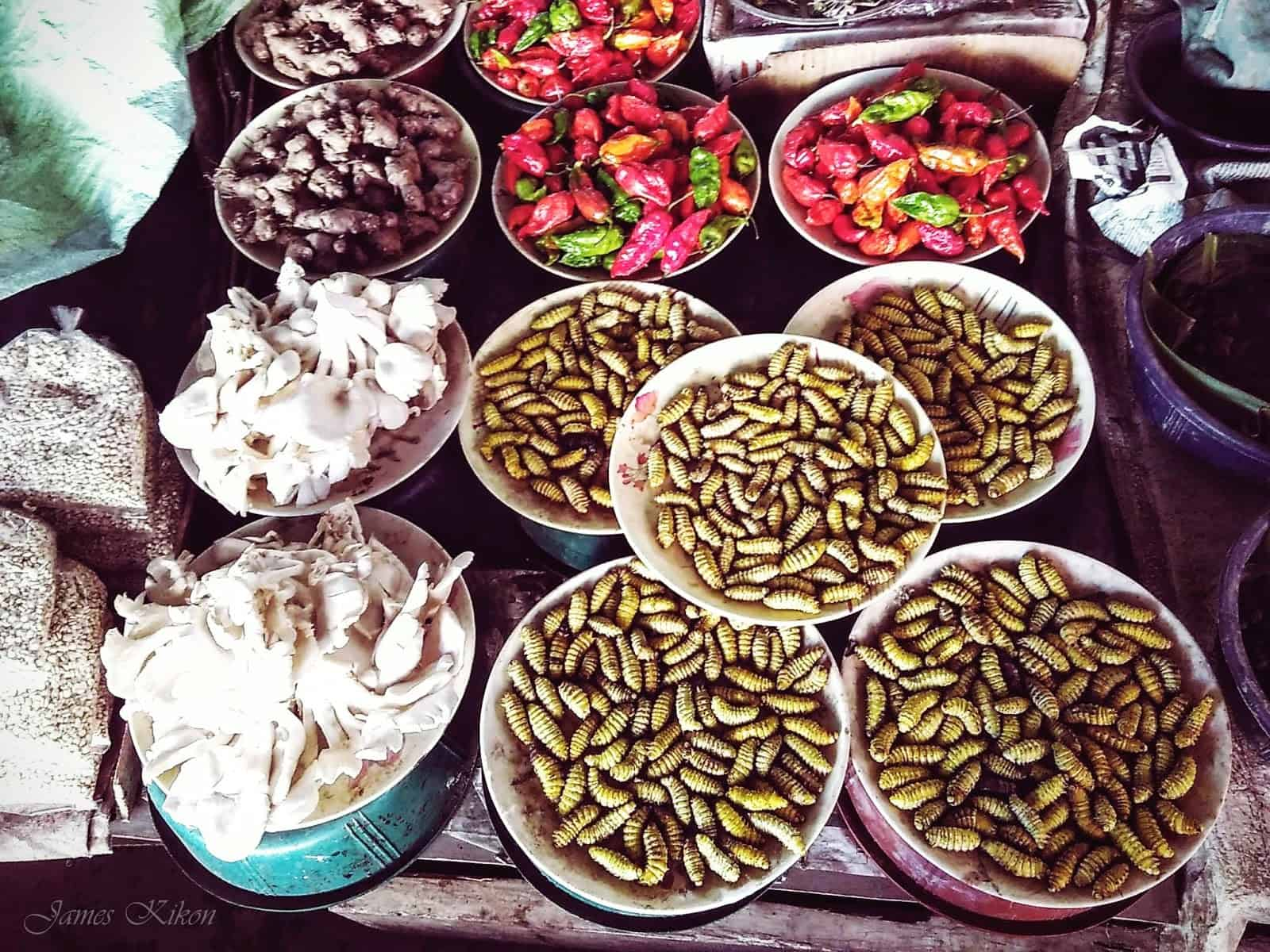 bizarre exotic food naga nagaland-silk worms2.jpg