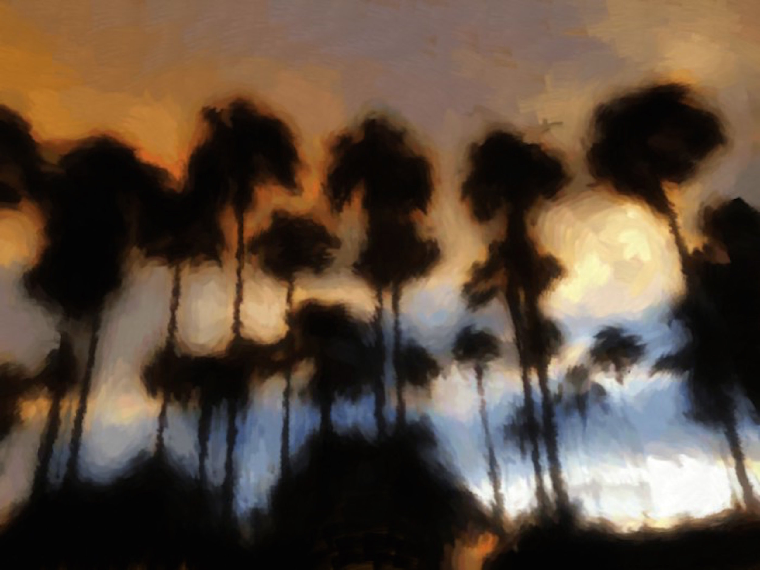 palm sunset.jpg