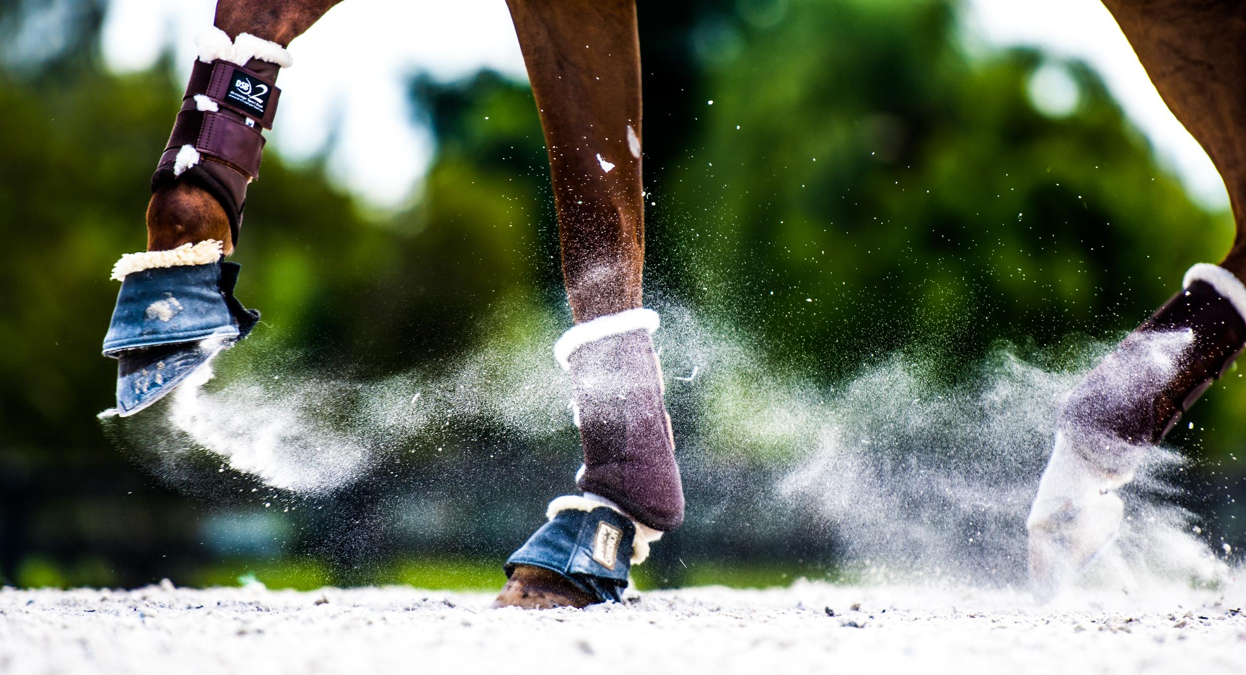 Dressage Sport Boot -