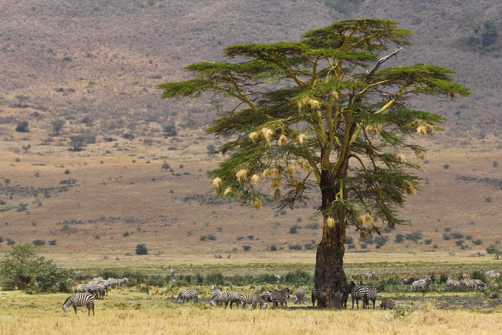 Tanzania-3759.jpg