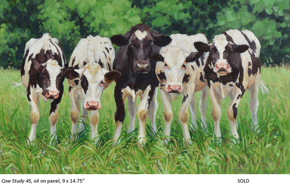 Cow Study 45_t4.jpg