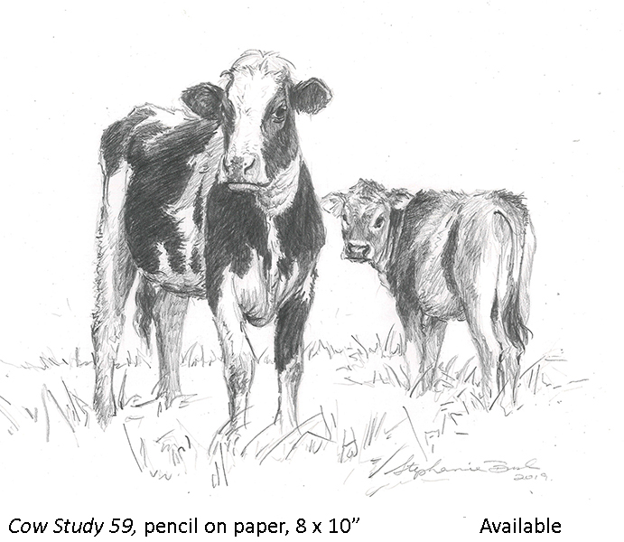 Cow Study 59_t2.jpg