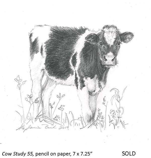 Cow Study 55_t4.jpg