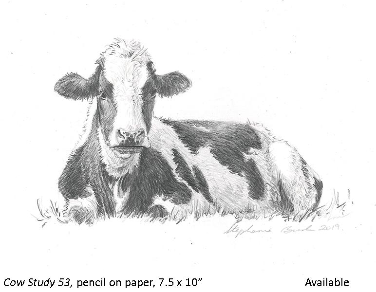 Cow Study 53_t2.jpg