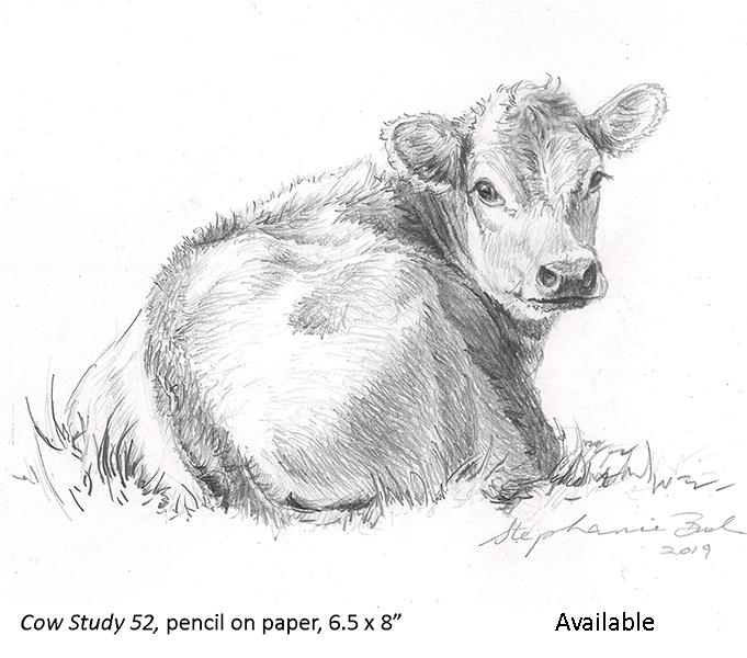 Cow Study 52_t2.jpg