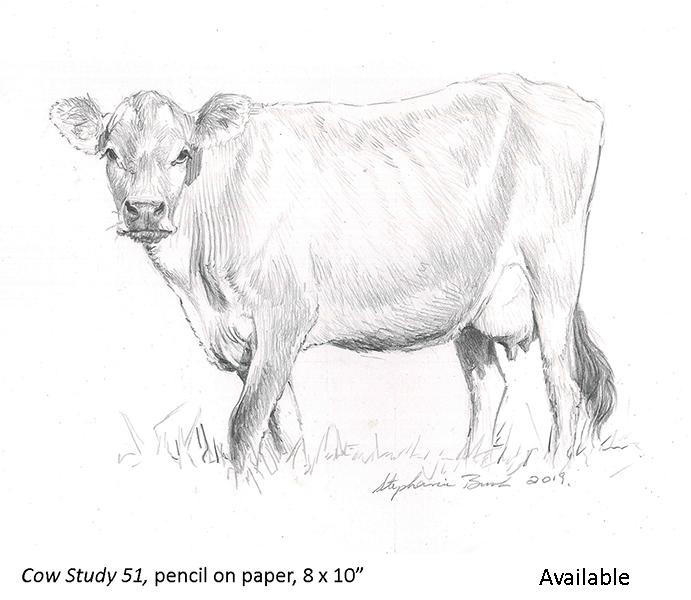 Cow Study 51_t2.jpg