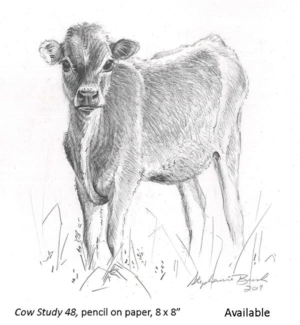 Cow Study 48_t2.jpg