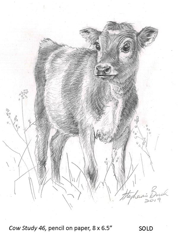 Cow Study 46_t4.jpg