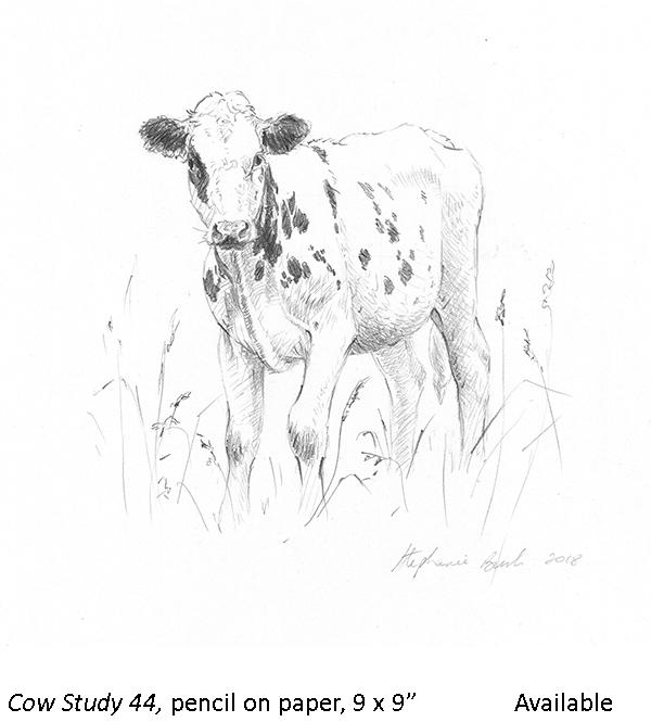 Cow Study 44_t2.jpg