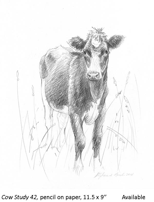 Cow Study 42_t2.jpg
