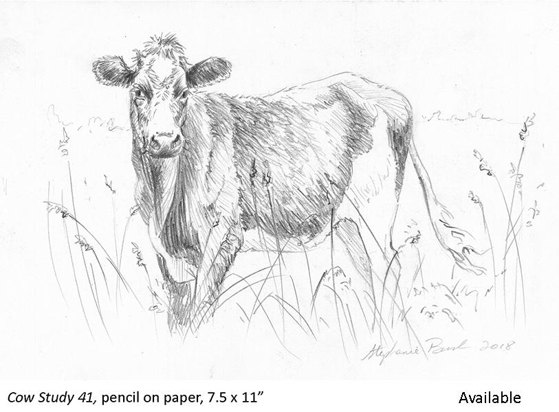 Cow Study 41_t2.jpg
