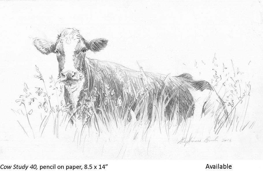 Cow Study 40_t2.jpg