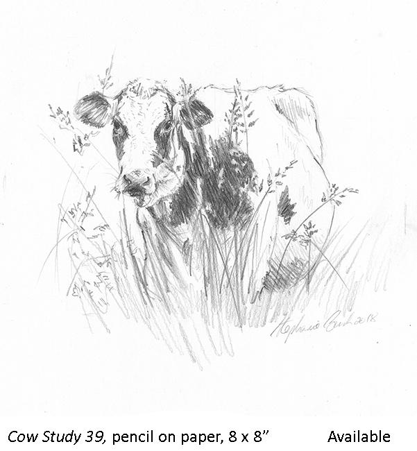 Cow Study 39_t2.jpg