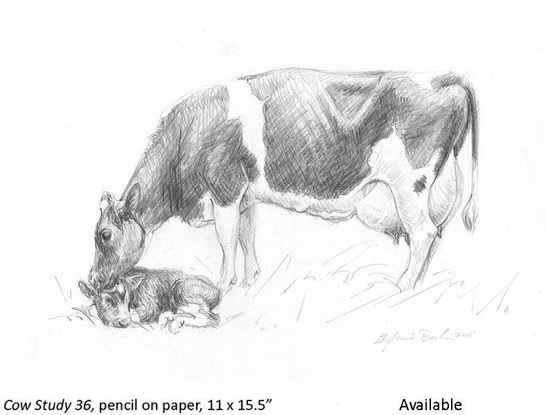 Cow Study 36_t2.jpg