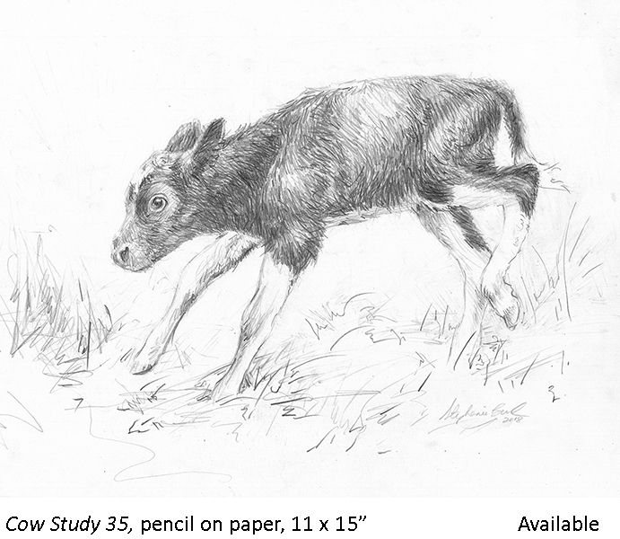 Cow Study 35_t2.jpg