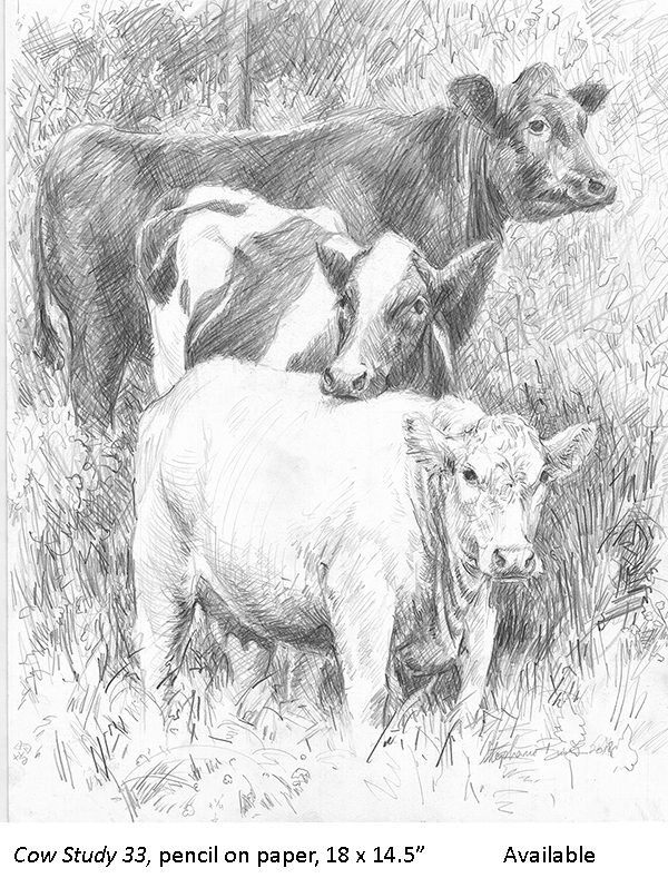 Cow Study 33_t2.jpg