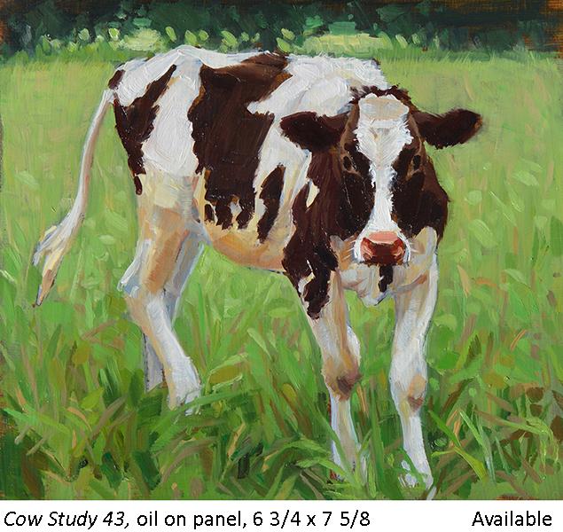 Cow Study 43_t2.jpg