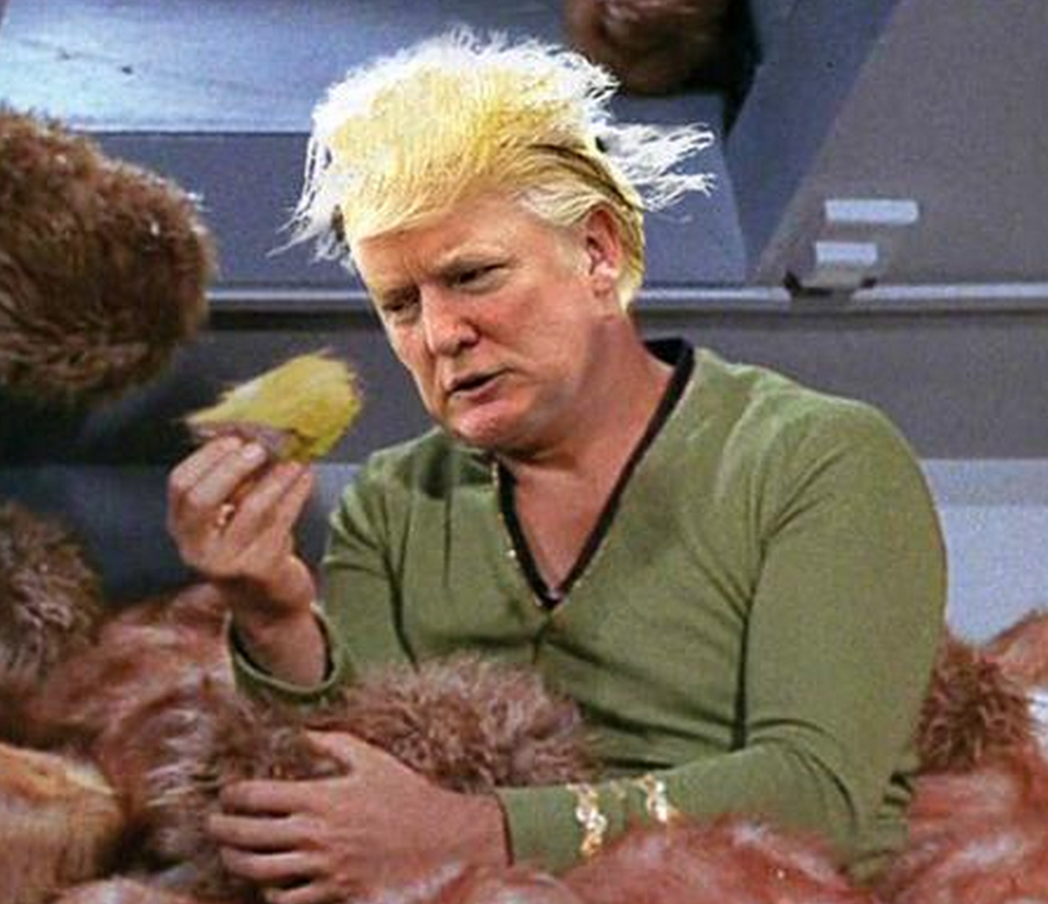 Trump may be harboring an illegal alien on his head. This awesome image from  https://disqus.com/home/channel/thefinalfrontier/discussion/channel-thefinalfrontier/there_is_no_democracy_in_the_star_trek_futureno_clintons_no_donald_trump/best/