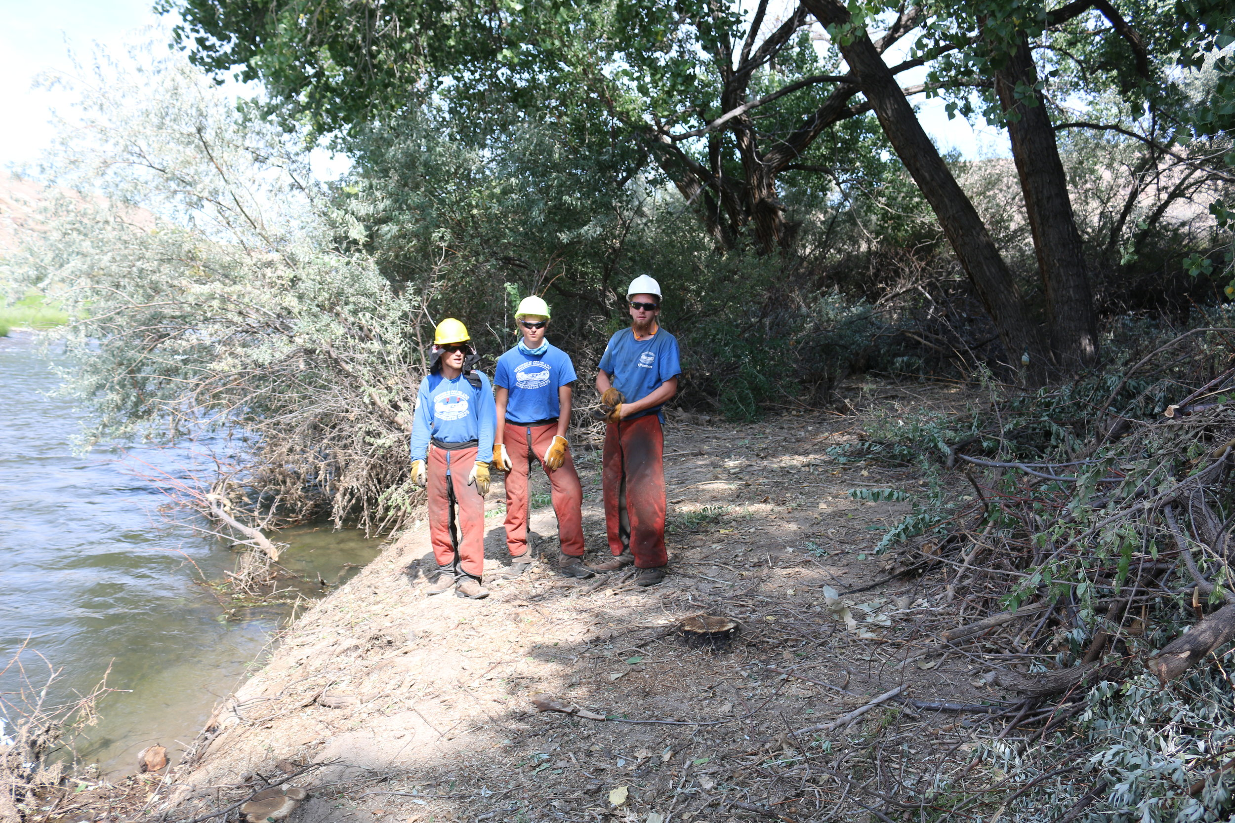 Youth Conservation Corps members cut the invasive species, Russian Olive, along the banks of the Gunnison River. Native trees and shrubs were planted to improve riparian habitat.
