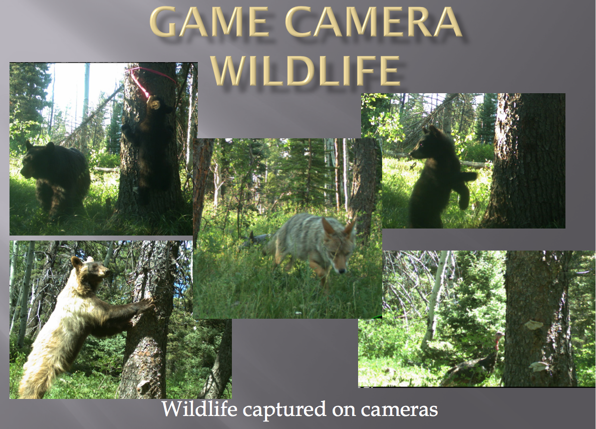 Game Camera Wildlife.png