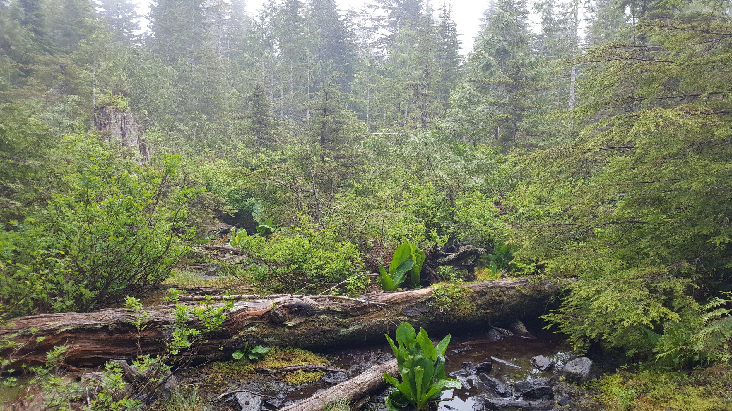 ashland trail 3.jpg