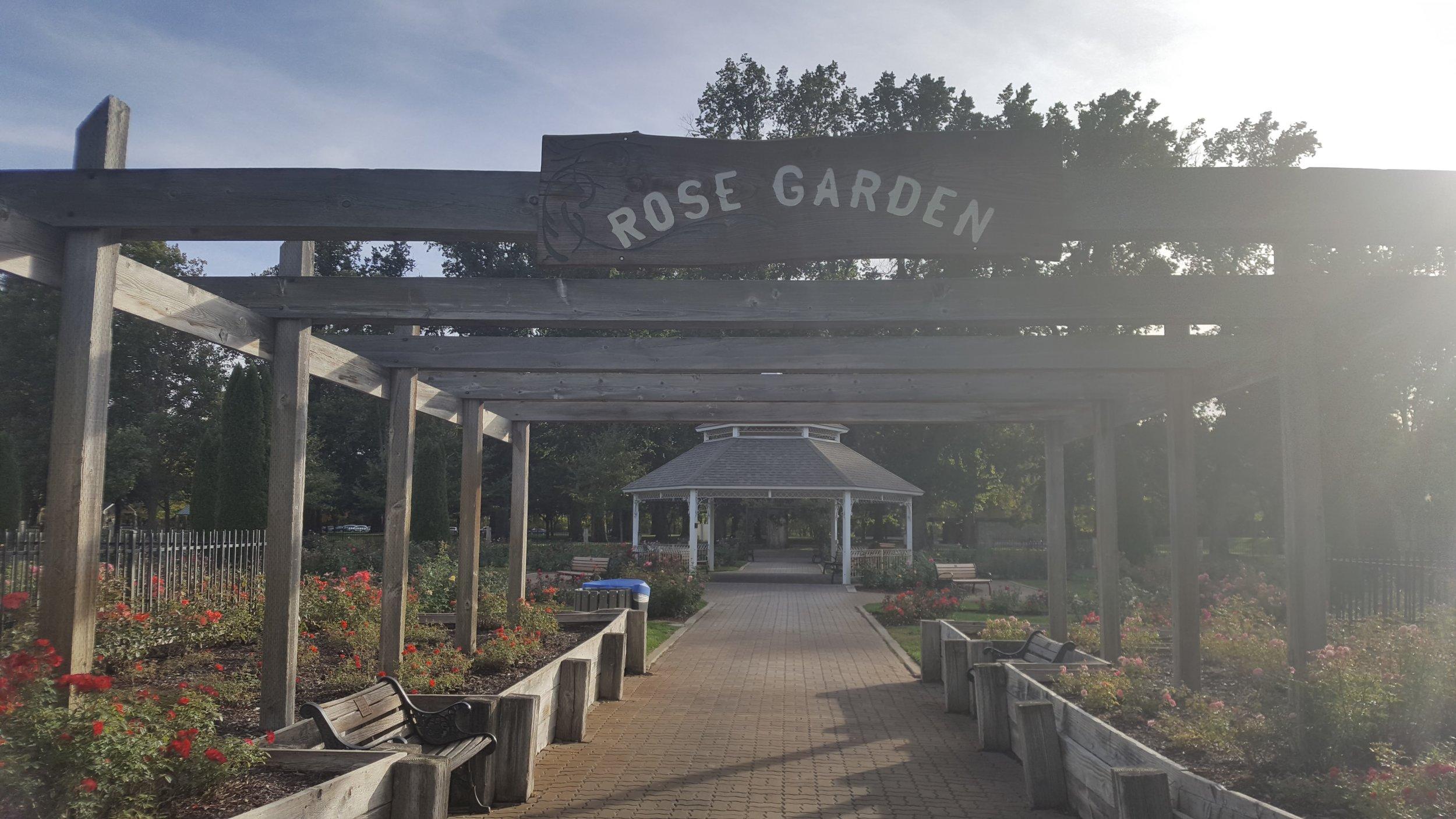 rose garden6.jpg