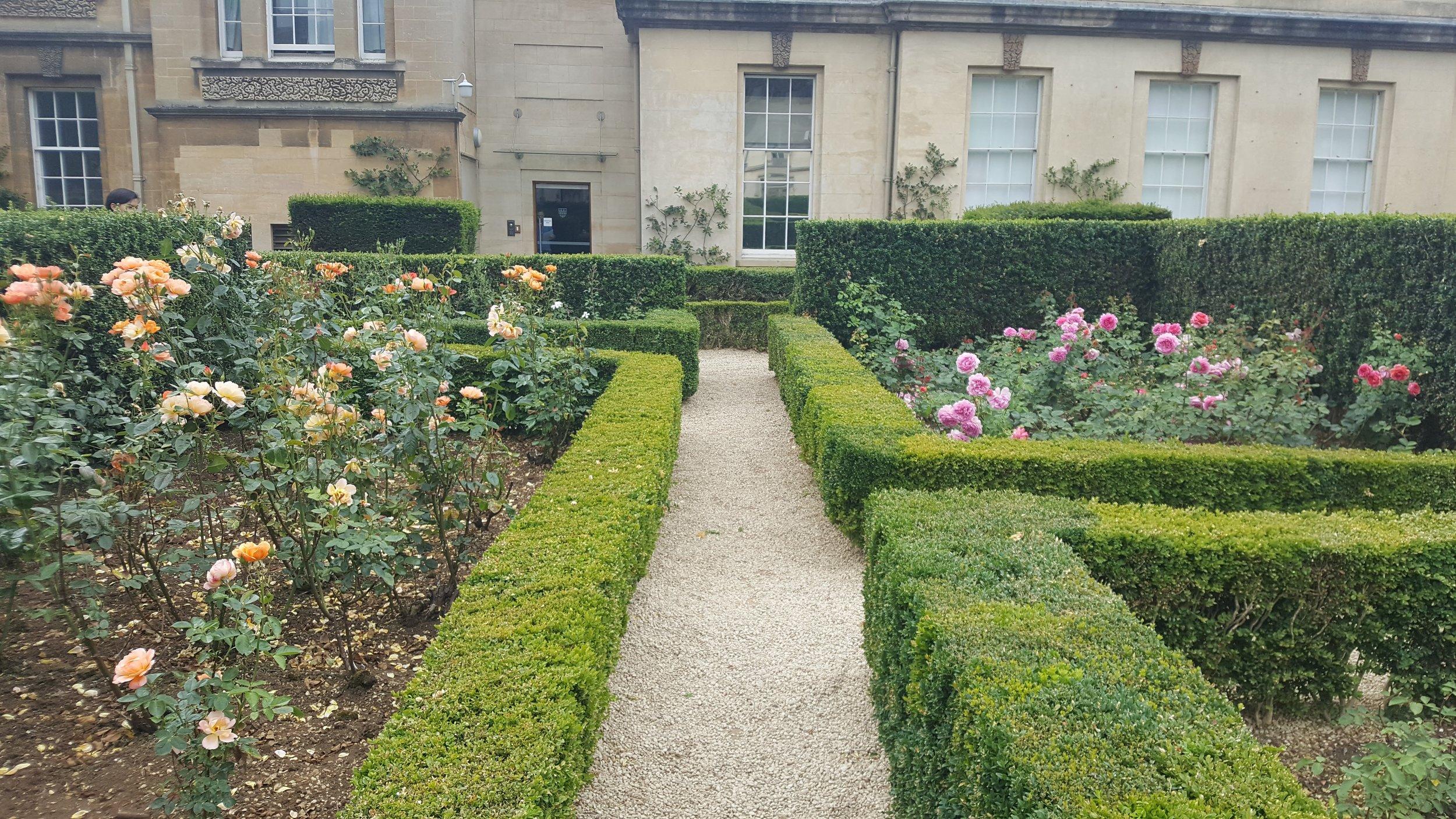 rose garden 3.jpg