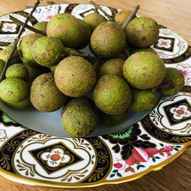 "Received another care package of fruit from the West Coast -- this time it's homegrown longan, also called dragon eye!  Broke out the wedding china for it. (Maybe ""broke"" out is not the best word...😂) What will you share today? 💚  #happakitchen #carepackage #homegrownfruit #longan #dragoneyefruit #sharingiscaring"