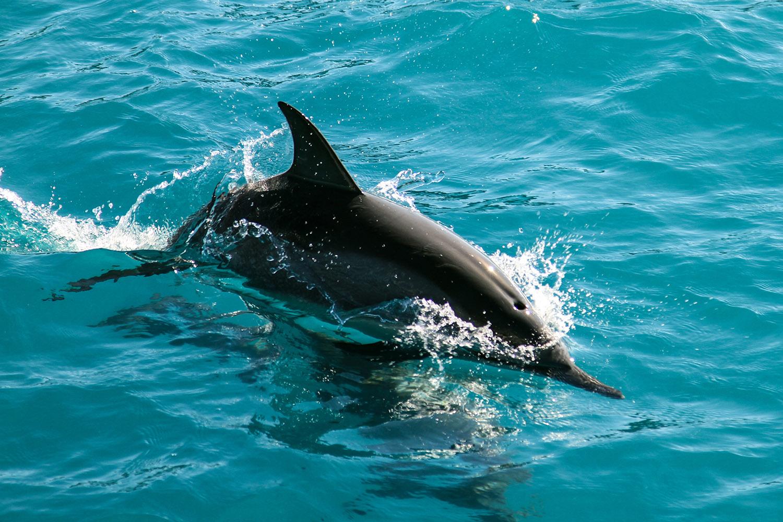 Dolphin_web.jpg