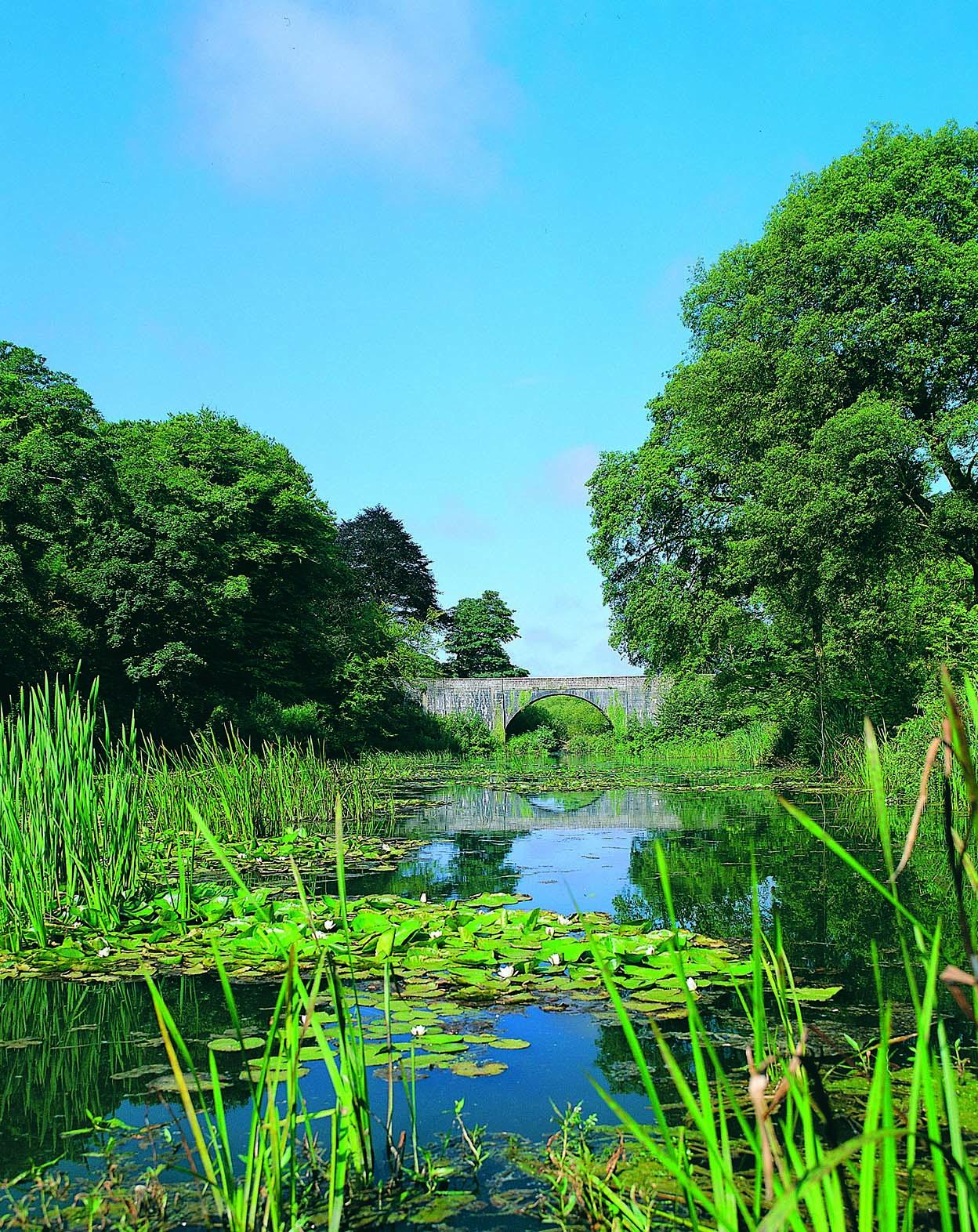 Bosherton Lily Ponds, Stackpole Estate