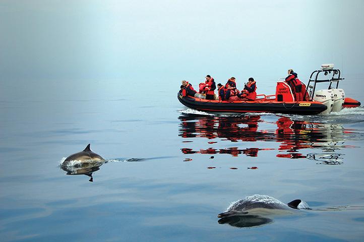 Dolphin Watching, St David's