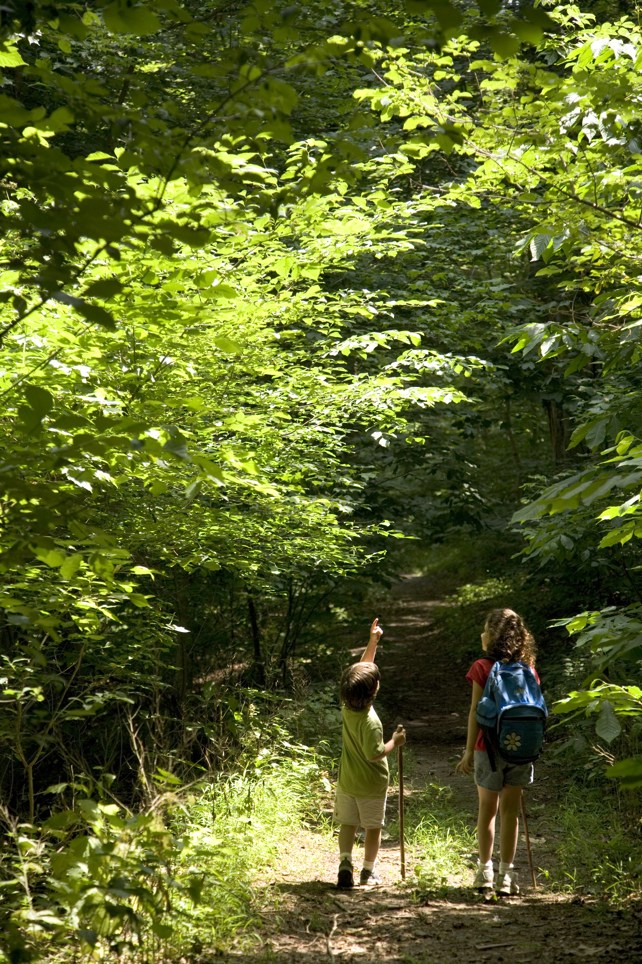 Children walking on a wooded path