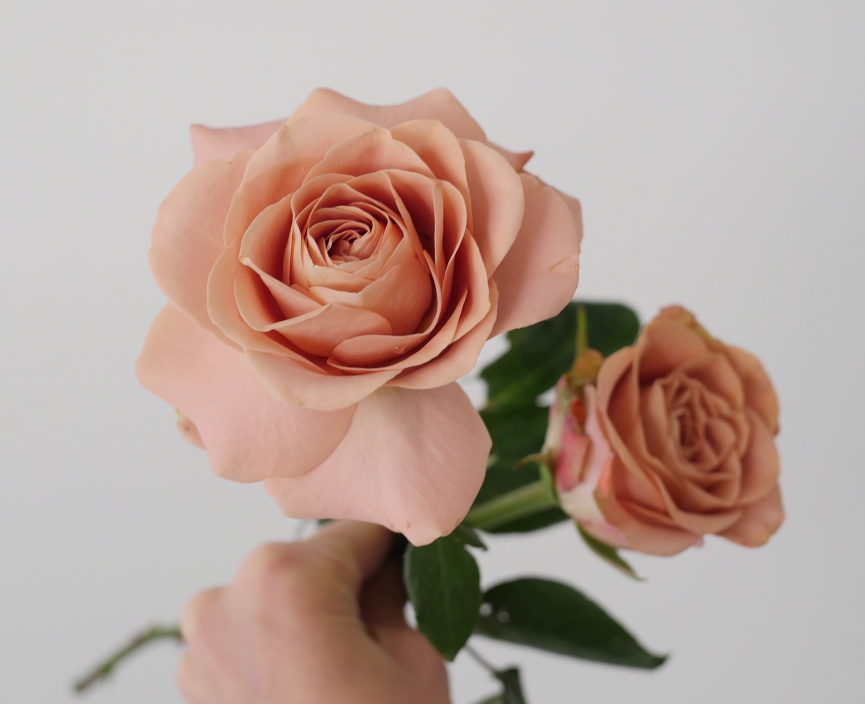 CAPPUCCINO ROSES - These terra cotta-colored blooms are quite simply one of our favorites, thrown in the mix as often as possible. A leading lady and luminary of our botanical repertoire. Not only do they have a unique hue, difficult to find in any other bloom, but they are dependably hardy. Built to last and perfect for wedding design, especially for those summery outdoor weddings!