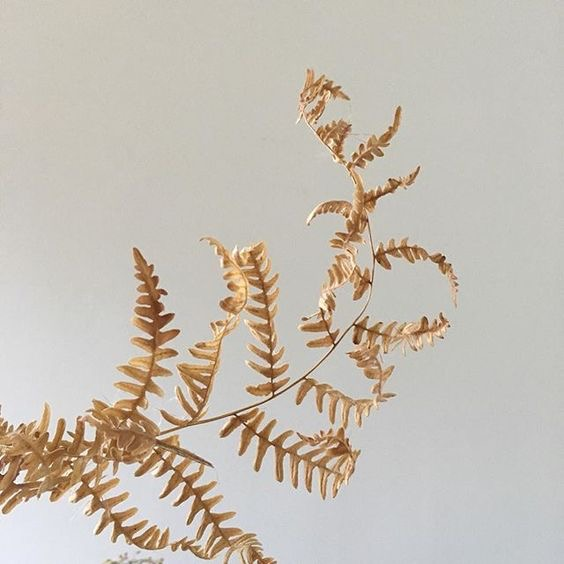 DRIED GOLDEN FERN - We cherish life in the Pacific Northwest for many reasons, one being the bountiful foliages and variety of flowers that can be foraged from nature. Abundant are the patches of Dried Golden Fern and the slightest addition can have a huge impact on a design.