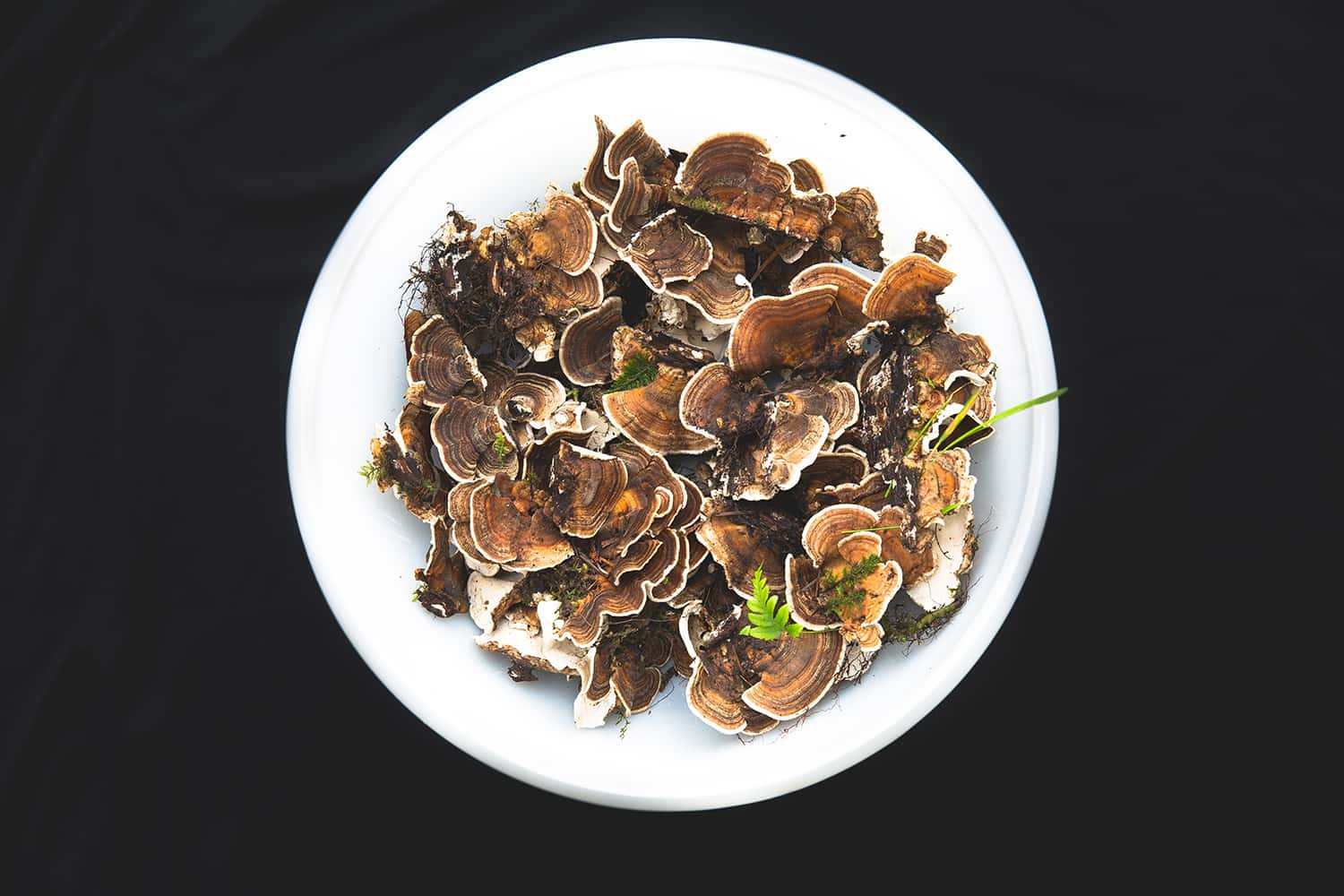 Harvested mushrooms collected by Portland Florist from nearby Portland Oregon forest