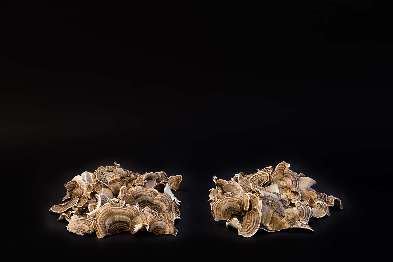 Portland-Florist-Turkey-Tail-Mushroom-32.jpg