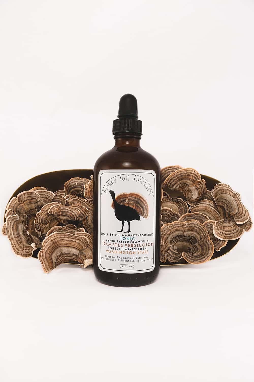 Portland-Florist-Turkey-Tail-Mushroom-64.jpg