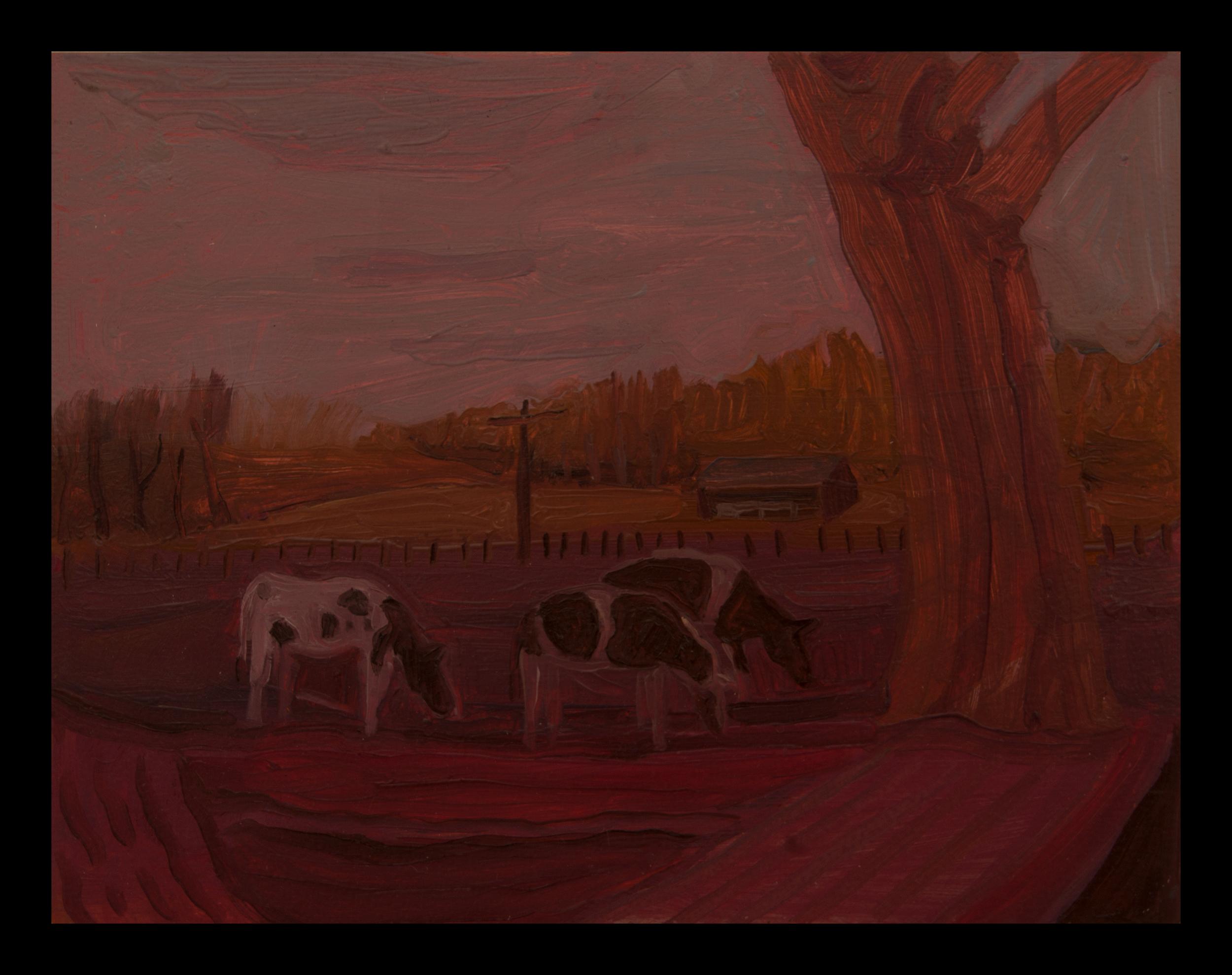 cow fields