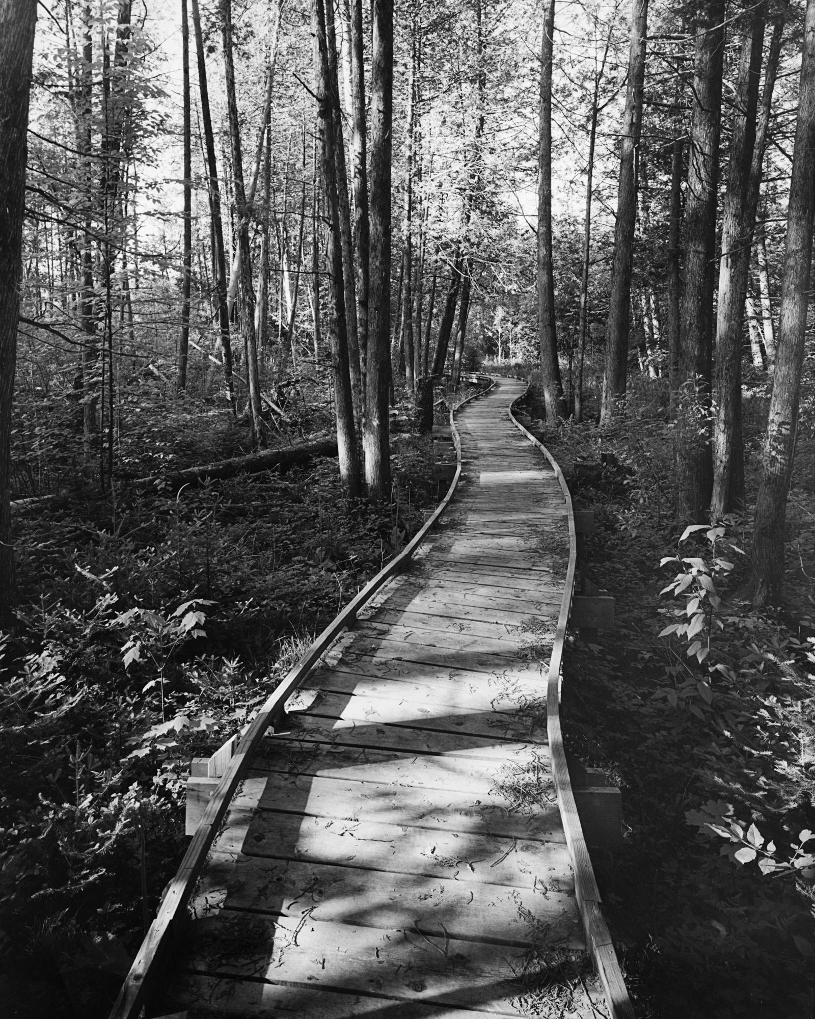 Ice Age Trail boardwalk