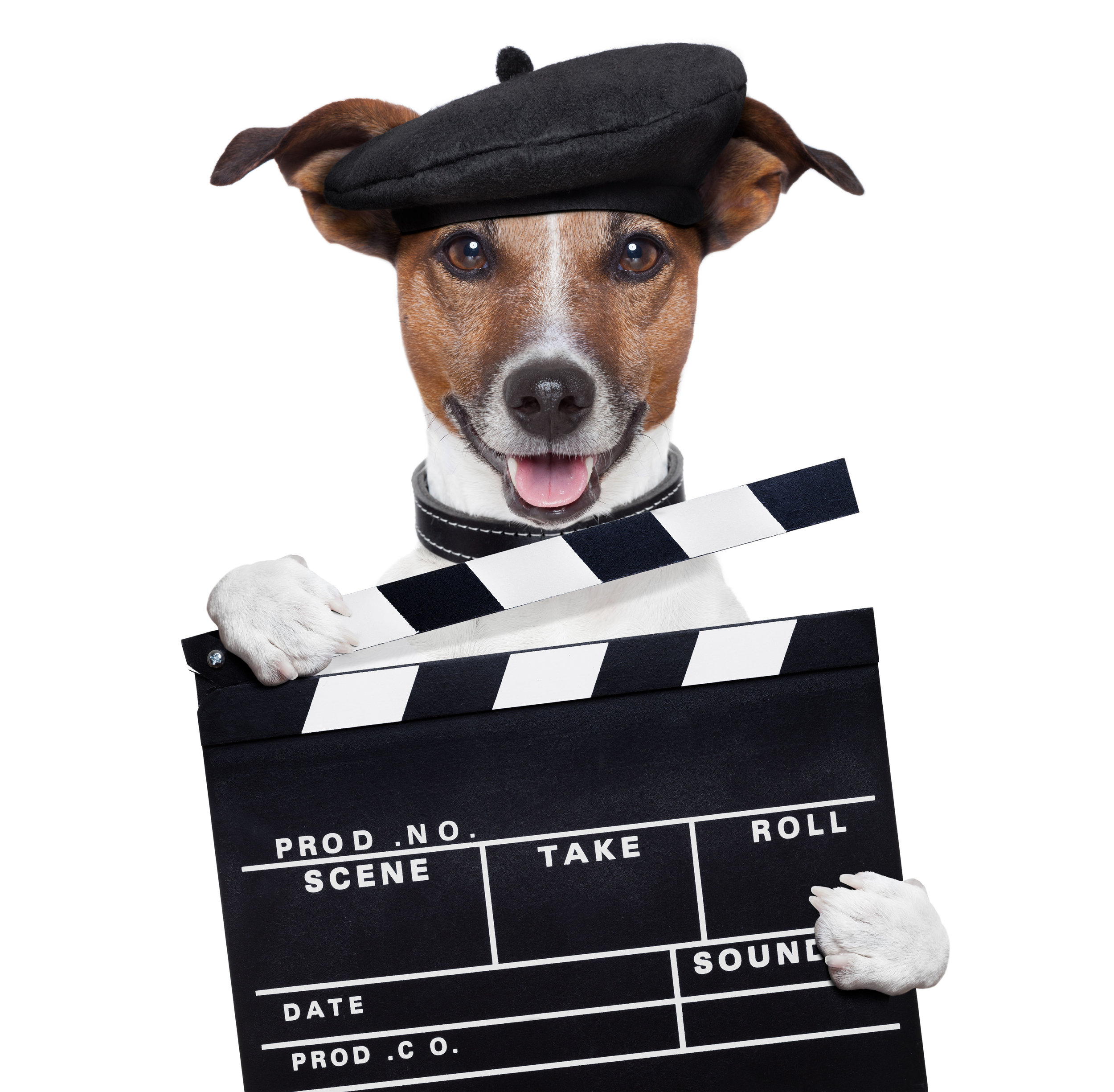 Cute dog wearing a beret and holding a clapboard.