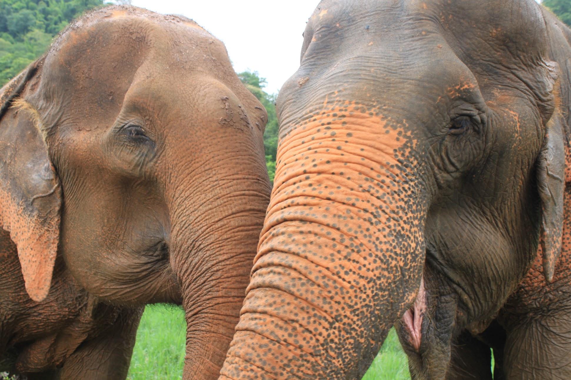 Elephant Park Sanctuary:Chiang Mai