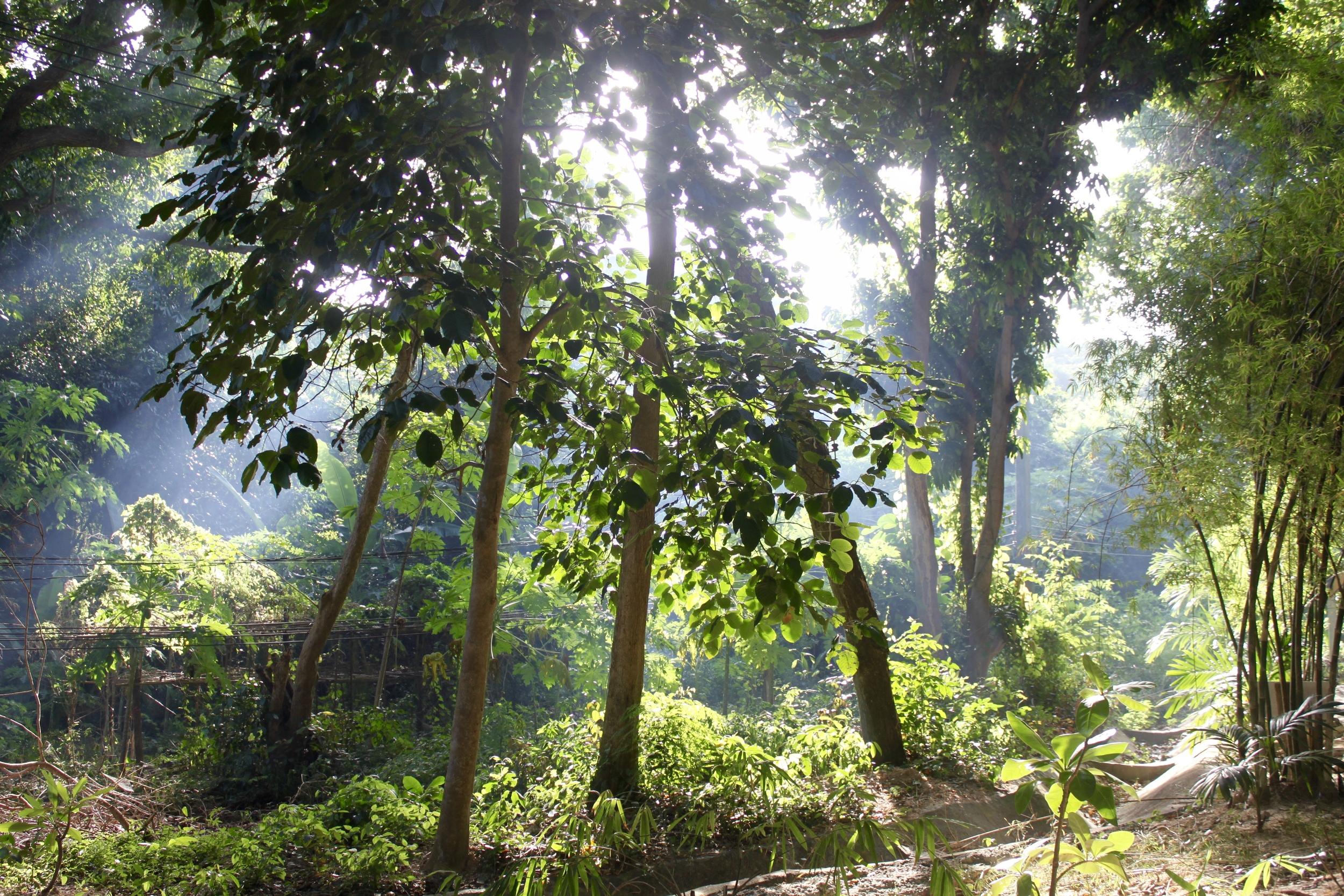 Bordering Ao Wai,  Koh Samet