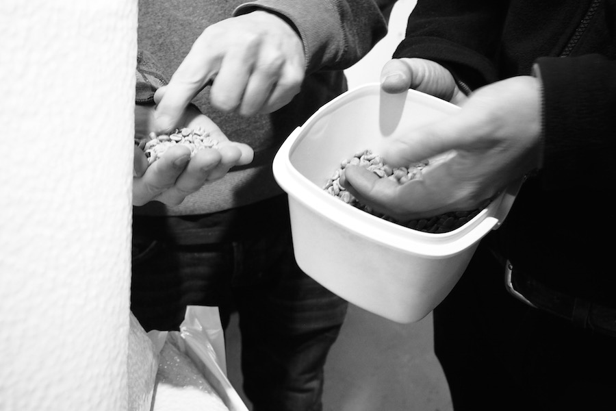 Neil and Ricardo showing Forster Inc how they inspect coffee beans for imperfections before roasting.