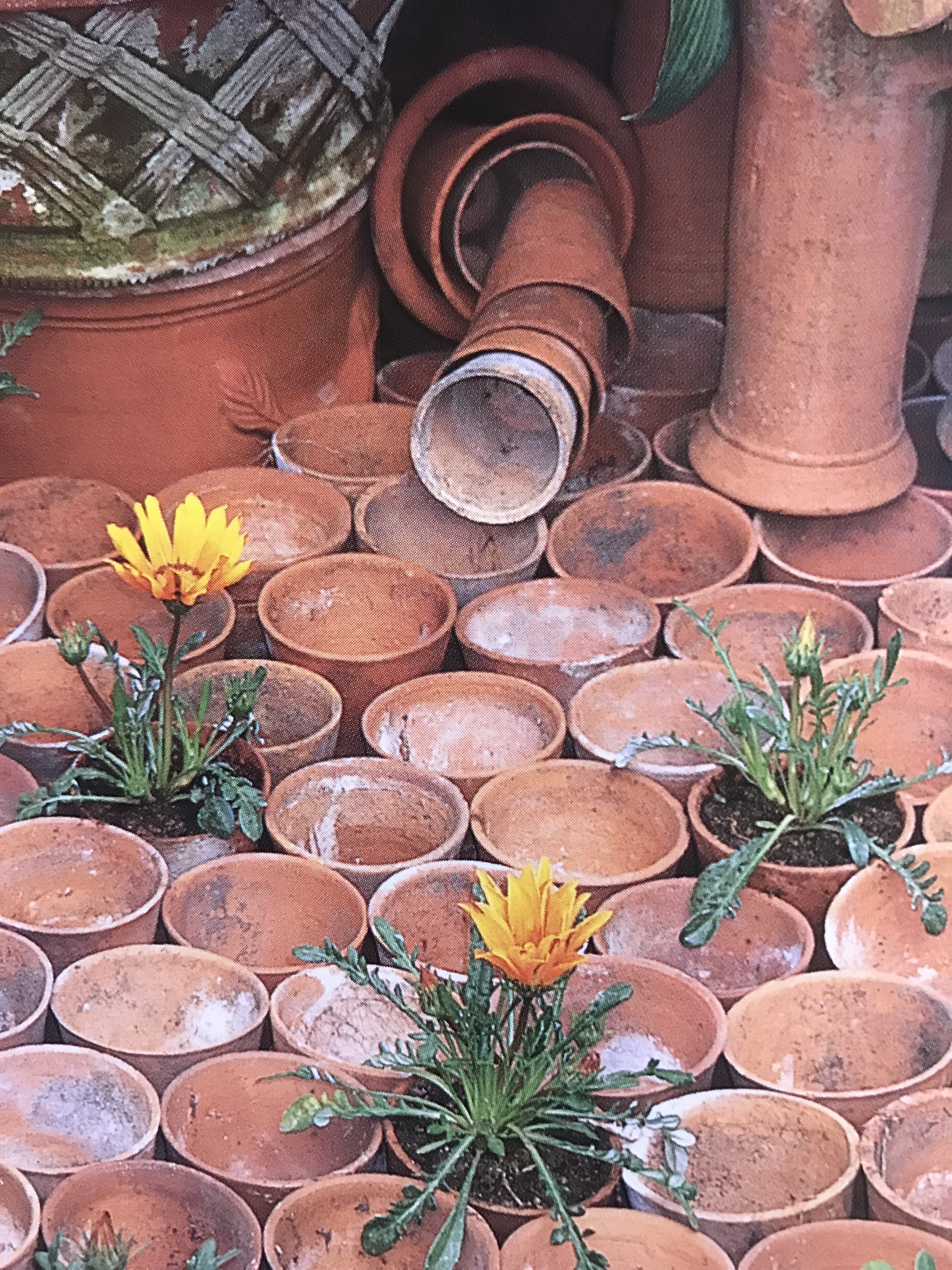 Terracotta pots in one corner