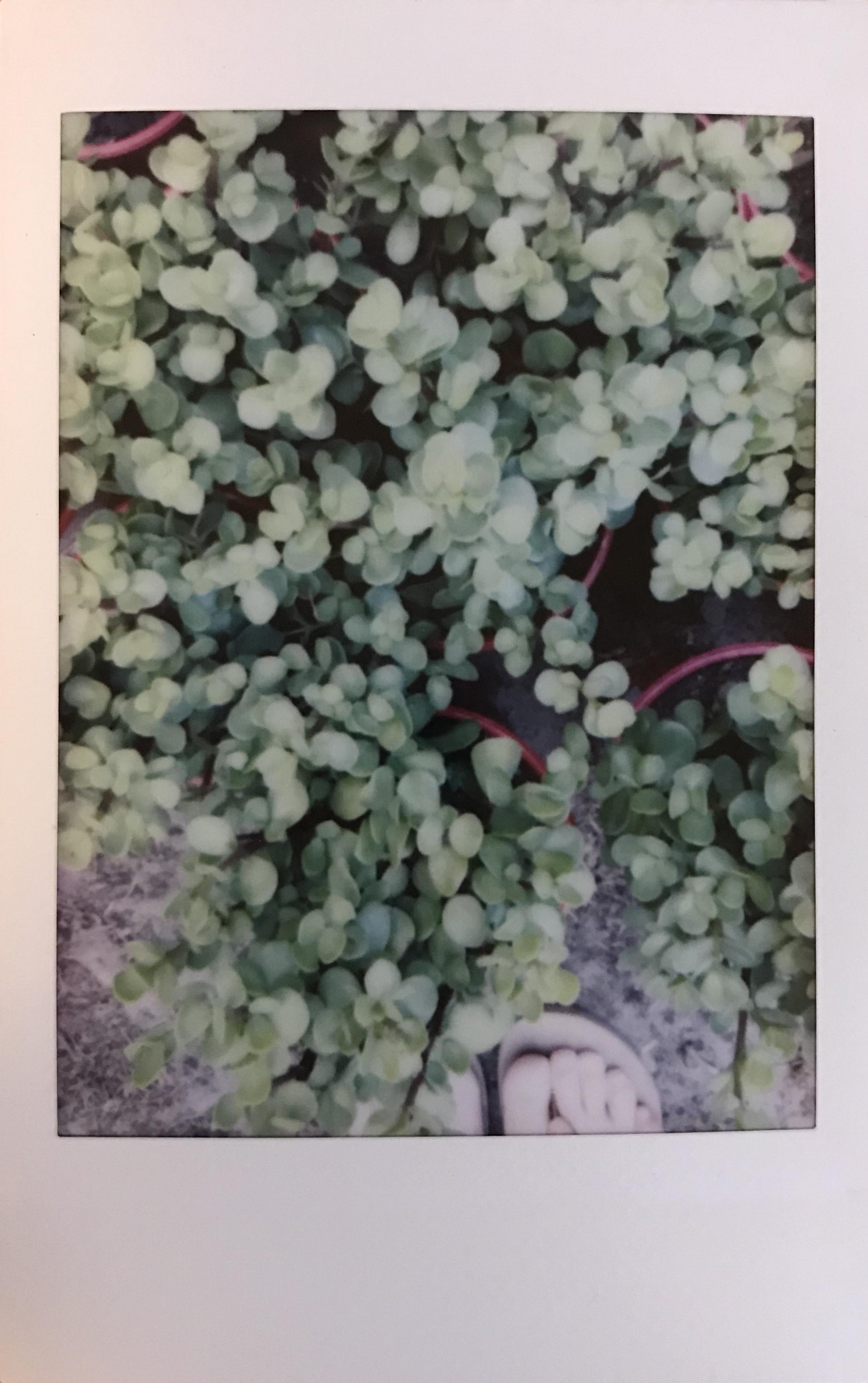 #2 WaterWise Plants