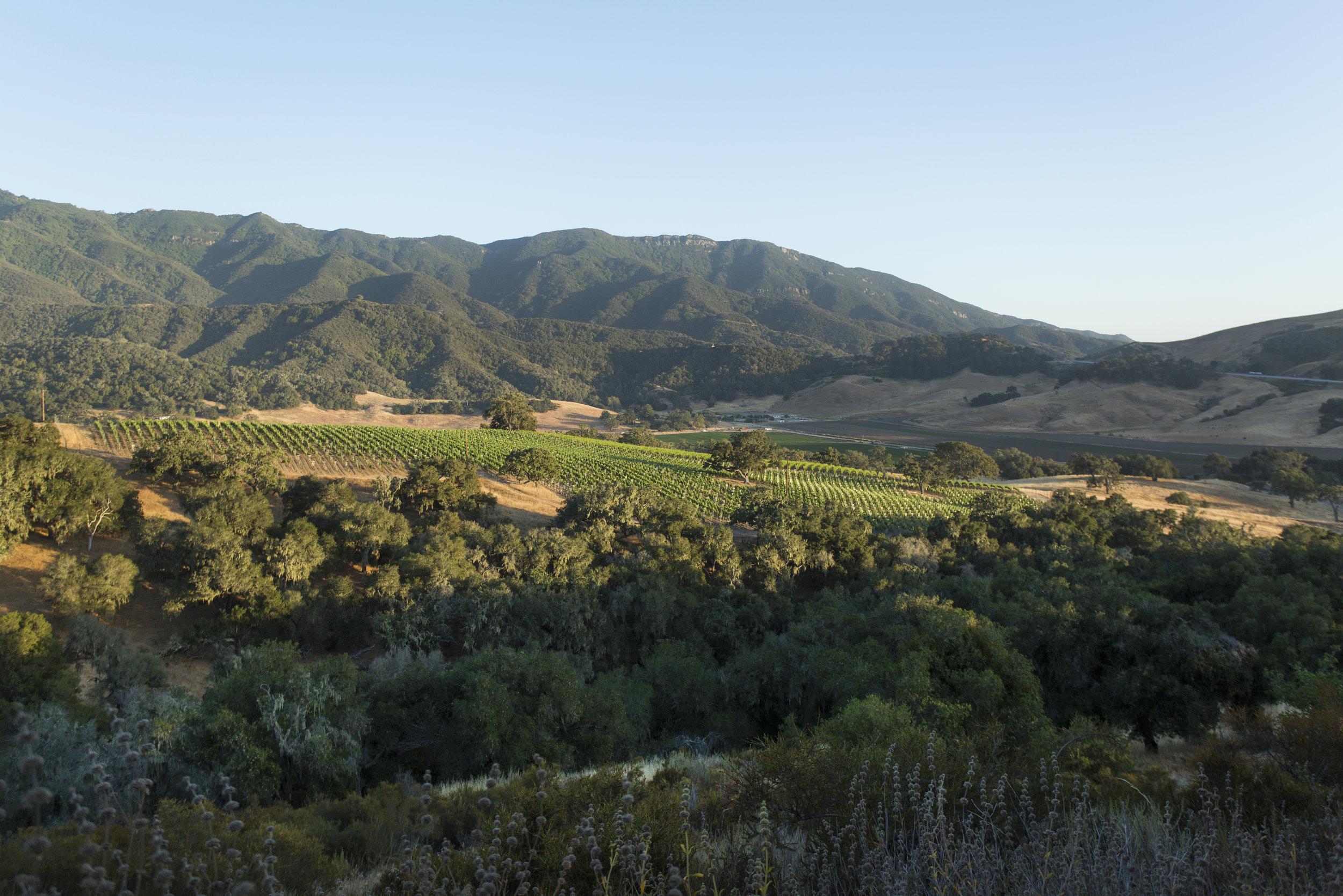 Folded Hills