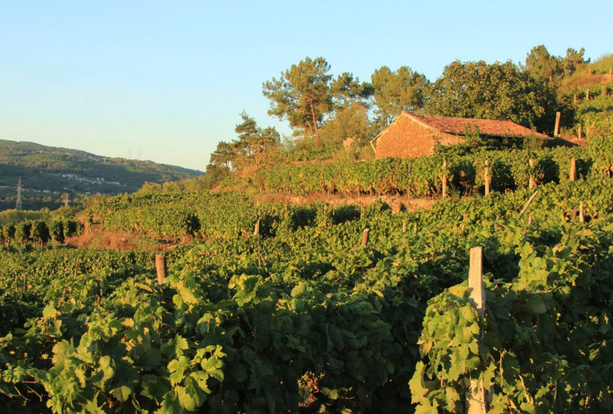 Antonio Montero vineyards.jpg