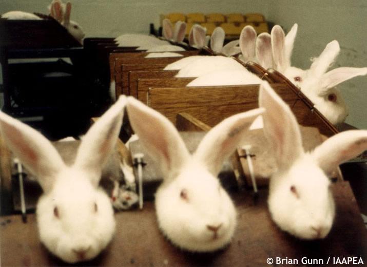 rabbits-cosmetic-test.jpg